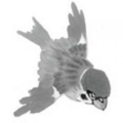 Ornithos.eu